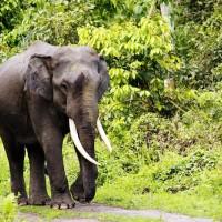 معلومات رائعة عن الأفيال بالصور والفيديو