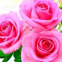 أفضل 10 إستخدامات لأزهار الورد التي لا تعرفها