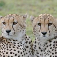 10 أسباب أدت إلى إنقراض الحيوانات والنباتات