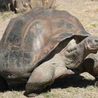 10 من أطول الحيوانات عمرا بالصور