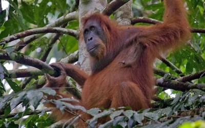 9 معلومات رائعة عن إنسان الغاب بالصور