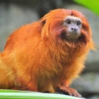 10 من حيوانات الأمازون الفريدة من نوعها بالصور