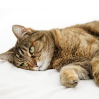 6 من أعراض موت القطط