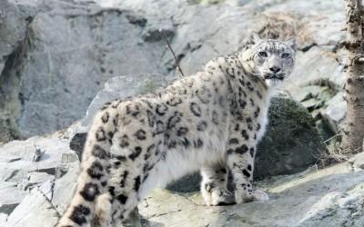 تزدهر بعض الحيوانات في الظروف الجبلية القاسية