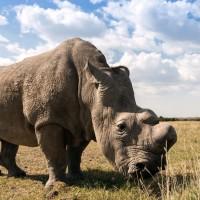 5 من أكبر الحيوانات الأفريقية البرية بالصور