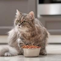 ما هو طعام القطط الصحي المناسب لهم ؟