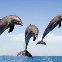 معلومات مثيرة عن الدلافين بالصور