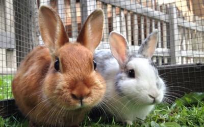 معلومات رائعة عن الأرانب