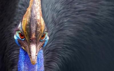 10 من أخطر أنواع الطيور في العالم بالصور