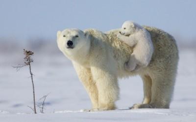 كيف تتكيف الحيوانات ذوات الدم الحار مع الطقس الحار والبارد؟