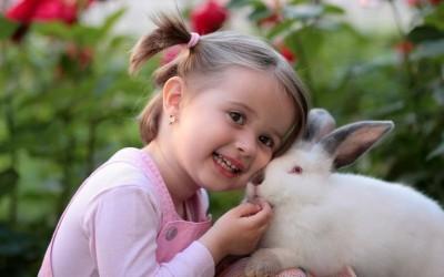 هل يمكن تربية الأرانب كحيوانات أليفة ؟