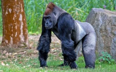 11 من حيوانات الغابة المدهشة بالصور