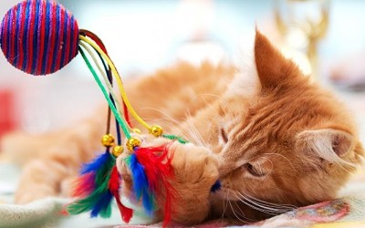 كيفية تجنب القطط الملل
