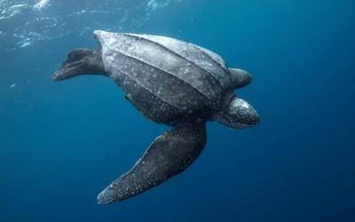 10 من أكثر الحيوانات المهددة بالإنقراض في العالم بالصور