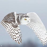 13 من حيوانات القطب الشمالي لاتصدق بالصور