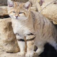 10 من حيوانات الصحراء تكيفت بشكل مذهل بالصور