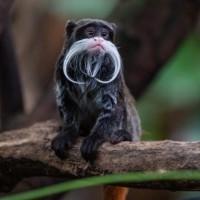 19 من أروع حيوانات غابات الأمازون بالصور