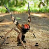 12 من أخطر الحيوانات المفترسة في غابات الأمازون بالصور
