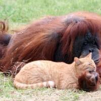 6 من الحيوانات لديها الحيوانات الأليفة الخاصة بها