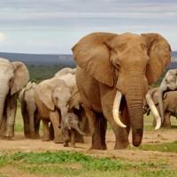6 طرق رائعة لمساعدة الأفيال