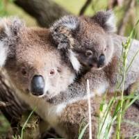 ما هو الفرق بين أنواع الحيوانات الأصلية والمتوطنة؟