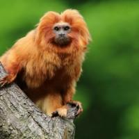 10 من أكثر الحيوانات الذهبية في العالم بالصور