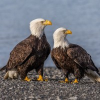 10 من الحيوانات التي تتزاوج مدى الحياة بالصور