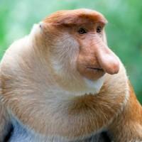 9 من الحيوانات غريبة الأنف بالصور