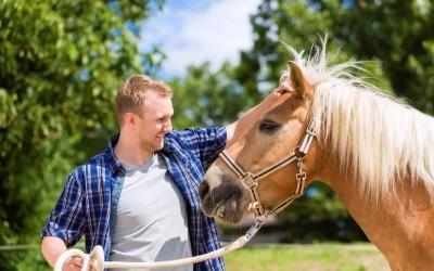 هل تستطيع الخيول التعرف على البشر وتذكرهم؟