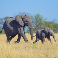 12 من أطول فترات حمل الحيوانات بالصور
