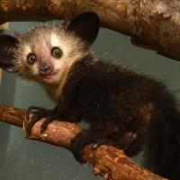 10 من الحيوانات المخيفة غير مؤذية بالصور
